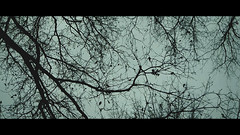 Captura (valentinsanchezm) Tags: vsmvisual woods wood tree nature naturaleza arbol pilar buenos aires ba bsas sky art movie filmmaking