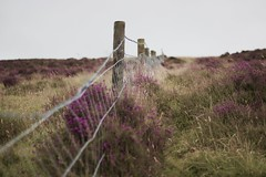 IMG_1998 (RL Mulholland) Tags: fence hff ireland countryside heather purple mountain walk 50mm f18 canon