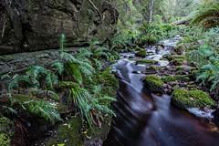 Snug River #50 (phil hirst) Tags: snug tasmania australia au pentaxk1 samyang24mmf14 river stream rainforest longexposure