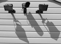 Surveillance (spencerrushton) Tags: blackandwhite sun white 3 black canon outdoors three surveillance odd windsor spencer guards polo windsorgreatpark monocrome canon75300mm canonlens spencerrushton 760d canon760d