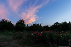 AA-20160727-1159 (andreas.abzieher) Tags: canon canon6d canonef24mmf14liiusm dossenheim sunset landscape primelens badenwrttemberg deutschland de
