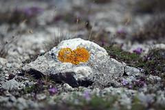 I love Gotland! (gallserud) Tags: vgglav gotland fr lauterhorn sverige