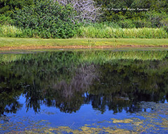 Peaceful Reflections (AngelaC2009***) Tags: 2016 july summer florida riverview pond reflection weather fujifilmfinepixs8200