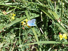 Promenade au château de La Brède, mercredi 10 août 2016. (Guillaume Cingal) Tags: labrède gironde montesquieu 1011août2016 argus
