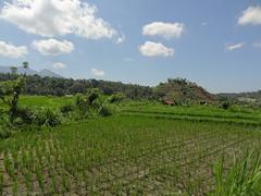 DSC05316.jpg (J0celyn79) Tags: asie bali indonésie karangasem id