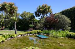 Blue Iris (Jocey K) Tags: newzealand bankspeninsula southisland motukarara irisgarden pond lilypond flowers cabbagetrees trees hedge sky water