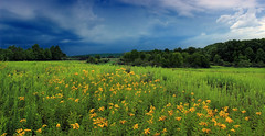 Montour Preserve (1) (Nicholas_T) Tags: pennsylvania montourcounty montourpreserve montourenvironmentalpreserve landscape field hills flowers wildflowers goldenrod sky clouds weather nature summer creativecommons