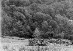 Remains of what once was (sandrovonah) Tags: ilford ilfordfp4 ilfordfp4125 ticino switzerland blackwhite verzasca valleverzasca bw trees grain film 120film 120 mediumformat homedeveloped silver hasselblad hasselblad500 hasselblad500c hassi carlzeiss carlzeissplanar carlzeissplanar80mmf28 analog ruins stones filmfilmforever