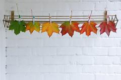 The fall line (StoraDan) Tags: fs161016 rad fotosondag fall hst lv leaves brilliant