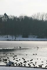 IMG_8406 (anthonywmthomas) Tags: tervuren parc winter landscape belgium
