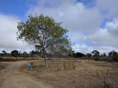 Outstanding in its field (Kelson) Tags: madronamarsh california hike marsh torrance nature southbay plants trees