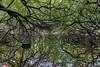 Winking Tree? (g a millington) Tags: carrmill carrmilldamn lake water resevoir st helens