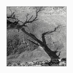 Fallen (Frans van Hoogstraten) Tags: tree jasmund shadow snow