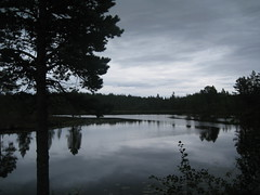 forest lake (VERUSHKA4) Tags: vue view nature lake tree water reflection forest summer day august travel album solovetsky island canon russia northen europe trunk beautiful cloud anzer bough branch