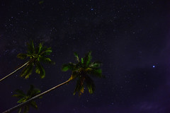 Starry Palms (free3yourmind) Tags: starry stars palms night nightsky sky philippines bohol