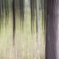 autumn forest (sami kuosmanen) Tags: icm intentionalcameramovement finland forest luonto light landscape long exposure europe etel suomi tree tuulos trees photography puu pitk valotus valo