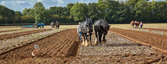 DSC05645 (Andy Oldster) Tags: eashing godalming farm plough ploughing heavyhorses shire sony alpha a65 slt