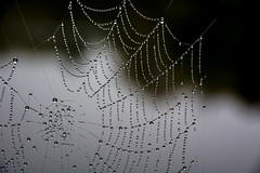 Spiderman was here (Jaco Verheul) Tags: web nikon d7100 nikond7100 nature spider drops water waterdrops pearls light macro jacoverheul 1685mm fog mist spiderweb spiderman ngc brilliant