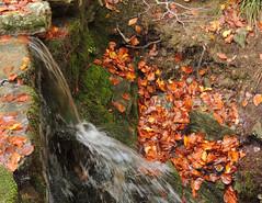 Pratomagno (anto_gal) Tags: toscana firenze arezzo lorociuffenna valdarno casentino pratomagno montagna 2015 autunno bosco acqua