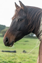 """""""Who are you looking at?"""" (gilliesavo. Catching up :)) Tags: horse portrait capture nature beauty attitude animals closeup"""