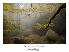 Birch and Bridge (DKNC) Tags: booneforkcreek blueridgeparkway northcarolina nc bridge footbridge fog autumn fall yellow birch leaves creek stream daleking