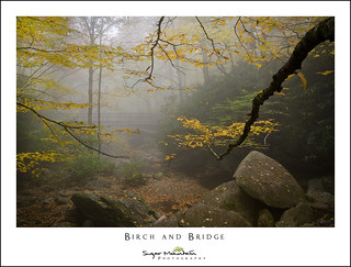 Birch and Bridge
