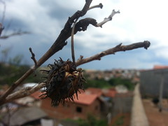this is the end (Rodrigo Alceu Dispor) Tags: city macro end mamona