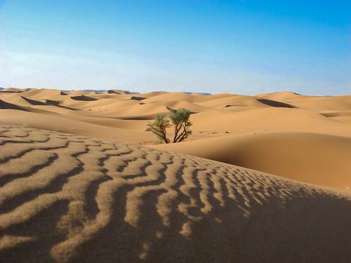 Ein einsamer Baum der Wüste