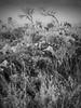 boolcoomatta sept 2014 - 9290413 - wiperaminga (liam.jon_d) Tags: blackandwhite bw monochrome landscape mono desert australian conservation australia outback sa southaustralia bha semiarid southaustralian billdoyle bushheritageaustralia westernloop conservationreserve abhf boolcoomatta bushheritage outbacklandscape australianbushheritagefund boolcoomattareserve wiperaminga wiperamingahill eremophilaloop pickmeset mostintblackwhiteimset popularimset