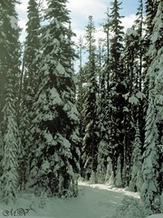 winter in the woods (~ Mariana ~) Tags: canon ski bc rockymountains forest glades sky landscape nature winter snow trees friends marculescueugendreamsoflightportal travelsofhomerodyssey mariana winterbeauty ~mariana~