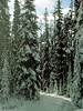 winter in the woods (~ Mariana ~) Tags: trees winter friends sky snow ski nature forest canon landscape bc rockymountains mariana winterbeauty glades travelsofhomerodyssey marculescueugendreamsoflightportal