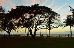 Flame Tree (jcc55883) Tags: sunset sky silhouette clouds hawaii nikon waikiki oahu nikond3200 yabbadabbadoo d3200 kapiloanibeachpark