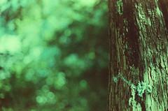 (Romn__PG) Tags: tree film rbol agfa precisa ct100 crosprocessing