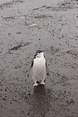 IMG_7723 (amdibene) Tags: green antarctica