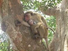 Mother and Baby Macaque in Tree