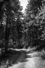 Fort d'Ardche (davidbasso_com) Tags: wood sun noir halo route arbres blanc paysages chemin fort ardche rhnealpes