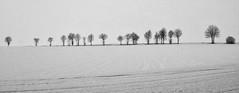 Bäume am Weg (gutlaunefotos ☮) Tags: schnee winter bw bäume weg