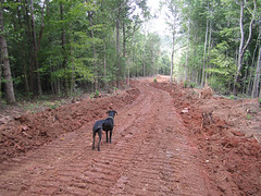 Mr. P supervises new road construction