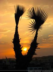 Sunset, Aswan, Egypt (JH_1982) Tags: sunset sun tree zonsondergang tramonto glow sonnenuntergang egypt palm nile prdosol egipto nil aswan ocaso  gypten egitto coucherdesoleil egito solnedgang apus solnedgng  assuan auringonlasku gypte   zachdsoca  assouan    asun matahariterbenam   assuo mttriln