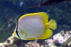 Aquarium de Paris  (16) (Mhln) Tags: paris aquarium requin poisson trocadero poissons meduse 2015 cineaqua