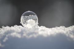 Spreading Bubble Frost (jess_clifton) Tags: ice backlight snowflakes frost frozenbubbles freezingbubbles winterexperiments