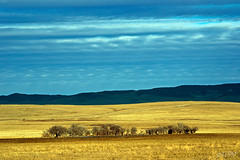 rough grassland (~ Mariana ~) Tags: ab canada foothills landscape winter sky clouds prairie nikon marculescueugendreamsoflightportal outstandingromanianphotographers friends travelsofhomerodyssey chinookwinds mariana ~mariana~