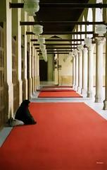 Al Ahzar II (wsrmatre) Tags: islam egypt cairo egipto mohamed mosque mezquite caire mahoma mosqe mahomet ericlpezcontini ericlopezcontini ericlopezcontinifoto ericlopezcontiniphoto ericlopezcontiniphotography wsrmatrephotography wsrmatre