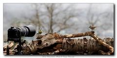 pb_2504 (calpha19) Tags: mars nature photoshop lumix photography photos forum ngc olympus adobe zuiko jardins oiseaux omd panoramique lightroom sauvage em1 2015 mésangebleue mésangehuppée lr5 olympusfrance icemicrosoft imagesvoyages poulbeau19 m40150pro