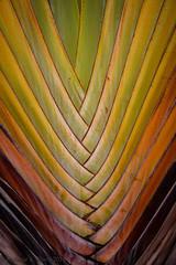 Colorful Palm (Melanie K Reed Photography) Tags: leaves hawaii palm kauai hawaiianvacation kauaivacation colorfulpalm