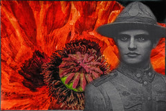 the blood of Flanders (Dale Michelsohn) Tags: life red plant flower photoshop canon death pain blood war poppy fields soldiers ww1 suffering opium flanders fredom g5x dalemichelsohn