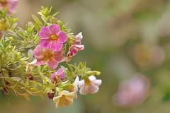 Fleurs en douceur (Lucien-Guy) Tags: flowers light fleurs nikon bokeh softness lumiere dslr douceur d7100