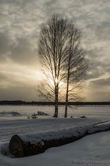 56-Kukkolankoski-03 copy (Beverly Houwing) Tags: sunset silhouette suomi finland frozen lapland kukkola birchtree tornioriver