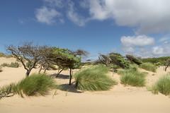 Dunes at Formby point (Keartona) Tags: formbypoint formby coast dunes trees windswept sandy snad landscape sunny summer day grasses sky england english