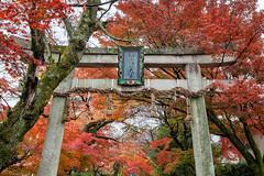 Kyoto Autumn (kbaranowski) Tags: autumn nature maple kyoto colorful fallfoliage japanesemaple nippon torii nihon beautyinnature krzysztofbaranowski 2016krzysztofbaranowski